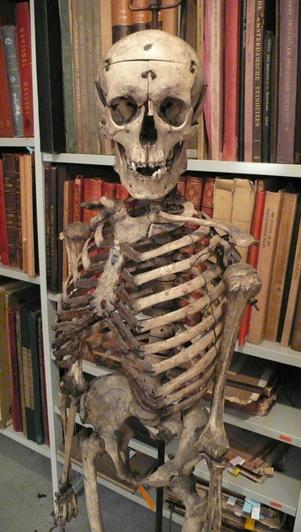 New zealand school has skeleton in the closet