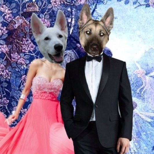A night to remember: Pets go out dancin'