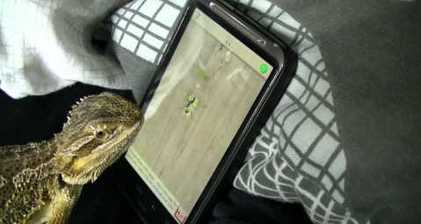 Lizard kicks ass at iPhone Ant Crusher app