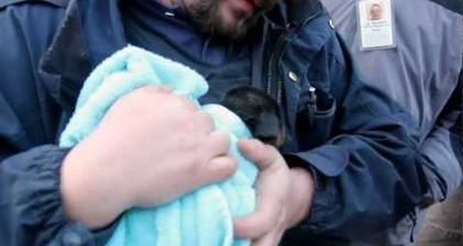 Puppy rescued from underground pipe