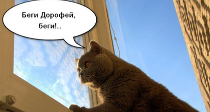 'Run, Dorofei, run!' the cry for Medvedev's cat
