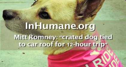Campaign group 'Dogs Against Romney' intensify attacks