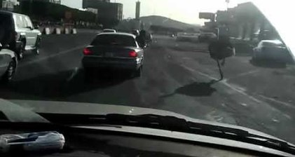 On the run: Ostrich navigates busy road