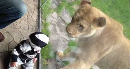Lions and babies and cameras - oh my!