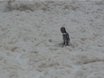 VIDEO: Body surfers frolic in a sea of natural foam
