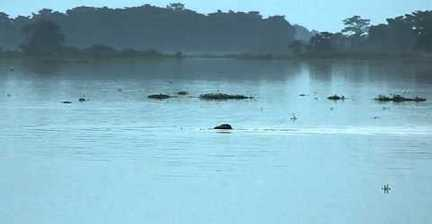 VIDEO: Elephant swims in India floodwaters